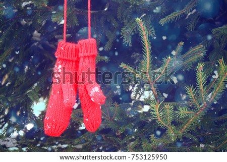 Red mittens hanging on fir tree green branches in winter park. #753125950