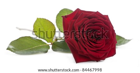 Red Naomi Rose in front of white background #84467998