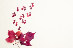 Red notes shoot out of two maple hearts. The concept of autumn sad music.