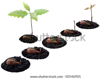 [Obrazek: stock-photo-red-oak-forest-growing-up-ri...546905.jpg]