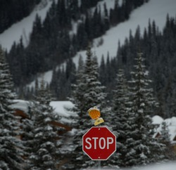 red octagonal stop sign on road in winter with yellow hazard light on top with snow covered tress and ski runs at ski resort in background signifying early closures this season some due to Covid 19