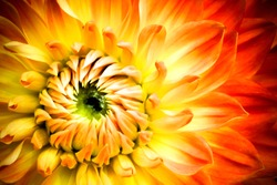 Red, orange and yellow flame dahlia flower with yellow and green center close up macro photo. Color photo emphasizing the bright reddish colours and dahlia flower floral abstract details.
