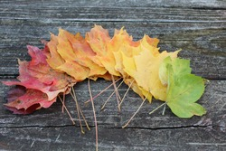 red, orange, yellow, and green fallen leaved fanned out