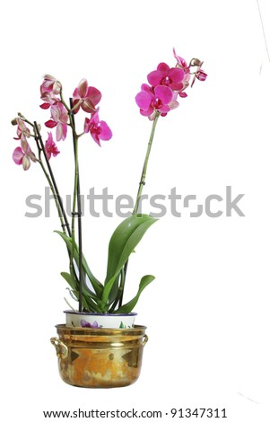 Red Orchid plant in a copper plant pot - stock photo