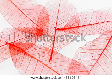 red paper leaves - Shutterstock ID 58605454