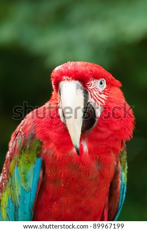 Red Parrot with Green Jungle Background
