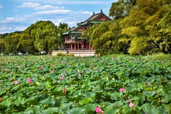 Red Pavilion overlooks Lotus Pads in Garden pond, Summer Palace, Beijing, China