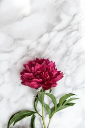 Red peony flowers on marble stone table with copy space. Natural summer blooms top view. Flowery holiday background.