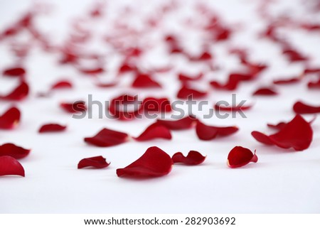 Red petals on bed, close up #282903692