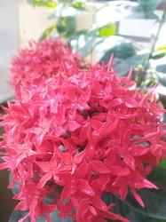 Red, pink background flower bukeh