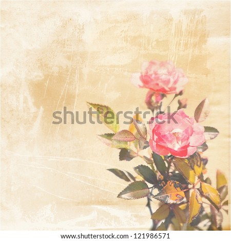 red pink rose on old sepia paper ; vintage background with flower - stock photo