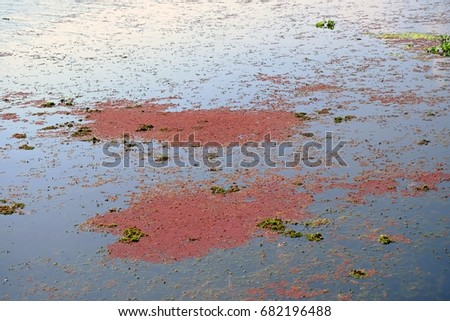 Red plankton over water surface at a swamp, green ecology and water view background