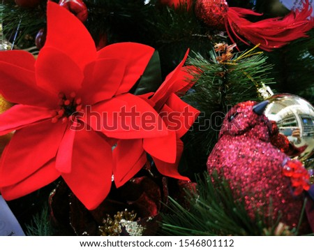 Red poinsettia flower, also known as the Christmas star or Bartholomew star. New year winter holiday xmas. Copy space. Top view. Christmas background. Winter holiday concept. Floral decoration.