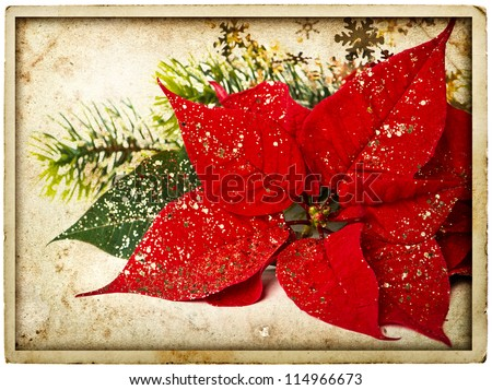 red poinsettia flower with christmas tree branch. vintage card concept