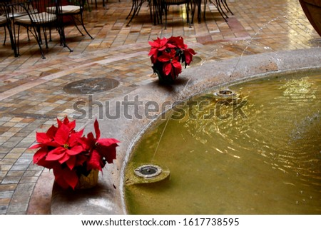 Red poinsettias next to a fountain in a town center. Chairs in the background.