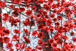 red poppies among barbed wire as a symbol of casualties of Russian military intervention in Ukraine (2014–present). art texture installation of red poppies among barbed wire