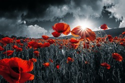 red poppies in the field. background imagery for remembrance or armistice day on 11 of november. dark clouds on the sky. selective color