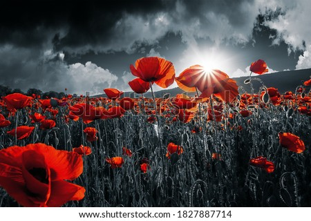 Photo of  red poppies in the field. background imagery for remembrance or armistice day on 11 of november. dark clouds on the sky. selective color