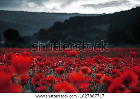 red poppies in the field. background imagery for remembrance or armistice day on 11 of november. dark clouds on the sky. selective color Сток-фото ©