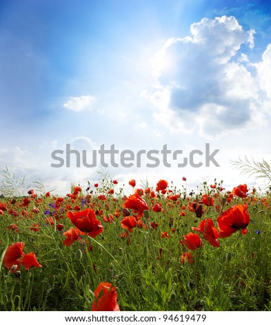 Red poppies on green field, sky and  clouds - stock photo