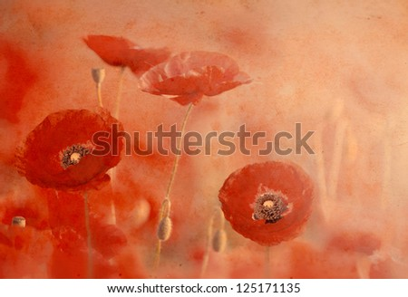 red poppies on old grunge paper background,vintage style