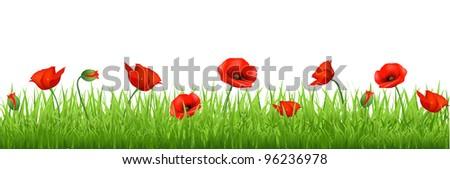Red Poppy Border, Isolated On White Background