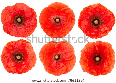 Red poppy flower collection isolated on white