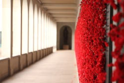 Red poppy flowers by the war memorial