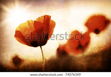 Red poppy flowers meadow, grungy style photo