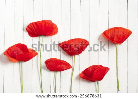 red poppy flowers on white wood table background