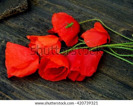 Red poppy on dark table Stock fotó ©