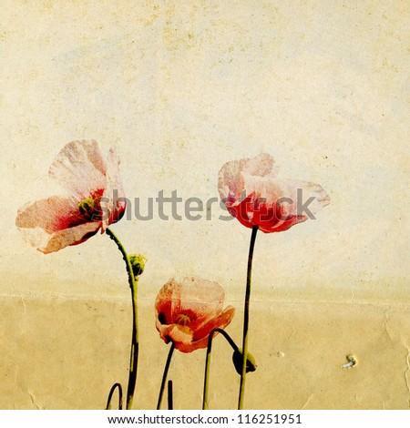red poppy on grunge background