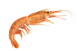 Red raw shrimp isolated on a white background.