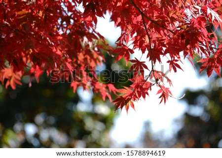red red red leaf forever