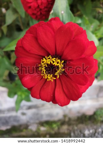 Red red red red flower #1418992442