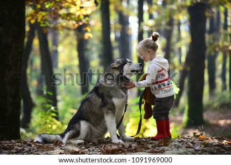 Red riding hood with wolf in fairy tale woods. Little girl with dog in autumn forest. Childhood, game and fun. Child play with husky and teddy bear on fresh air outdoor. Activity and active rest.
