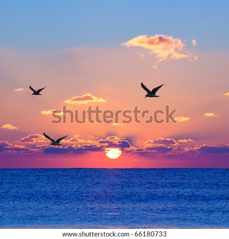 Red rising sun above the dark blue sea with seagulls