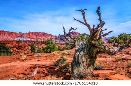 Red rock canyon desert dead tree. Lonely dead tree in red rock canyon desert. Red rock canyon dead tree. Dead dry tree in red rock canyon desert
