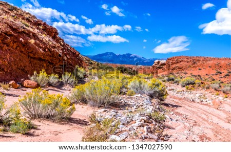 Red rock canyon desert landscape. Mountain red rock canyon desert flowers view. Red rock canyon desert flowers. Yellow flowers in red rock canyon desert