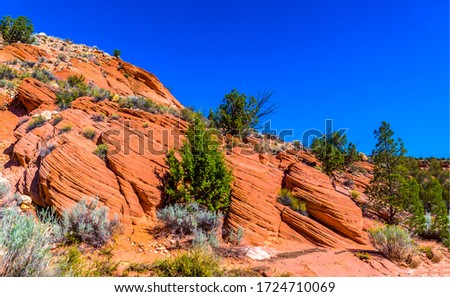 Red rock canyon desert sandstone trees