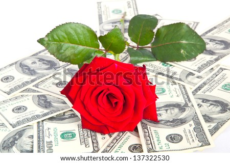 red rosa on dollar background