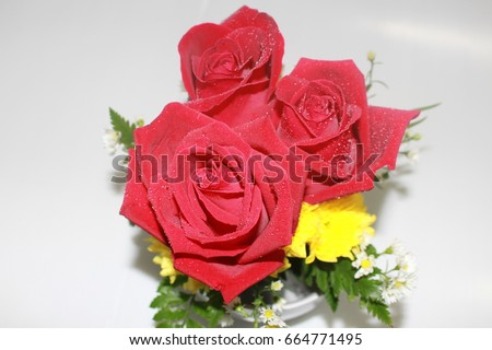 Red Rose #664771495