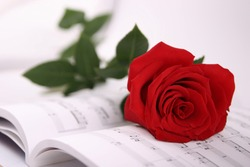 red rose and notes