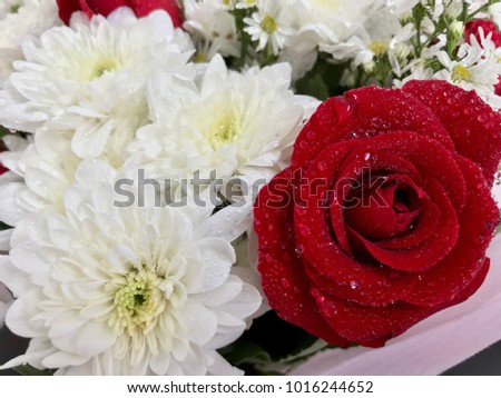 Red rose and white chrysanthemum flower arrangement, red rose bouquet for valentines card, fresh flower texture background #1016244652