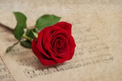 Red rose flower and music notes sheet. Grungy texture. Selective focus