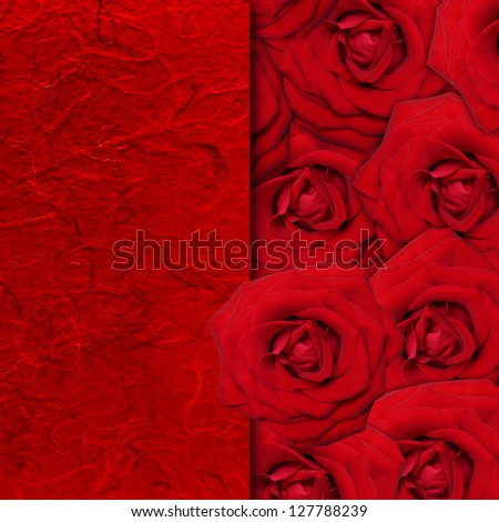 Red rose flower background.