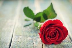 Red rose flower on vintage wooden background