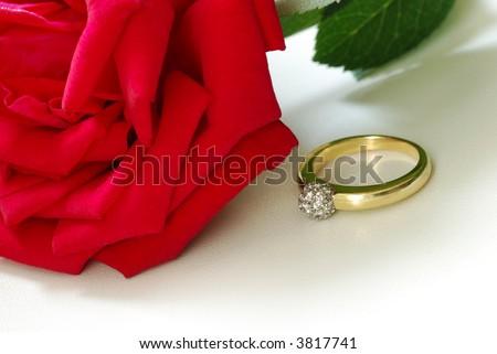 red rose & gold ring