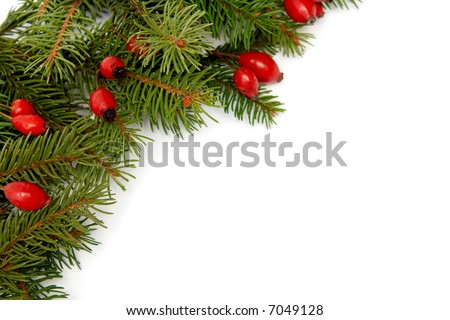 Red rose hips and green spruce on white #7049128