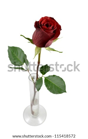 Red rose in a vase isolated on a white background.